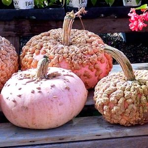 Unusual decorative gourds