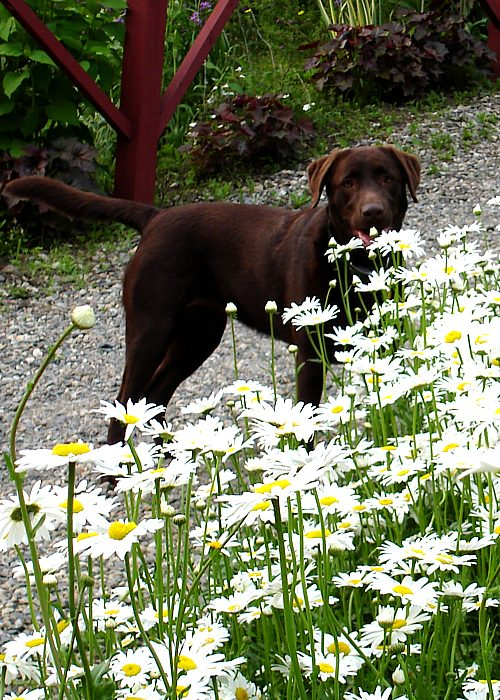 Running in the daisies