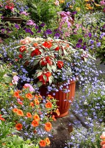 Potted plants of all types