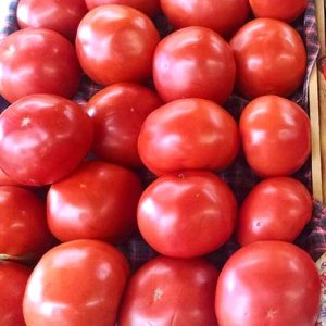 A fine crop of tomatoes