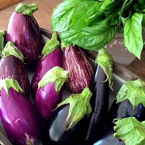 Fresh basil and eggplant