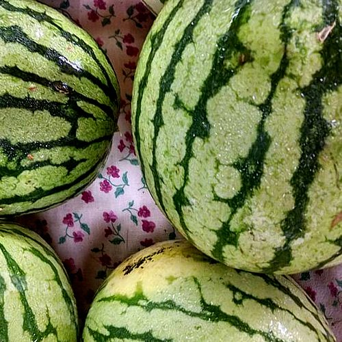 Mouth watering melons