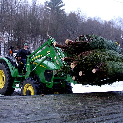 Christmas Trees arriving at the farm