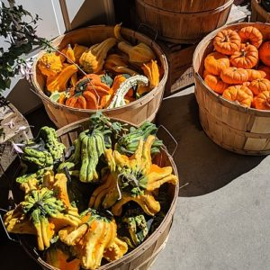 Baskets of unusual gourds and mini pumpkins.