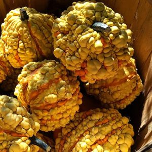 Colorful fall gourds.