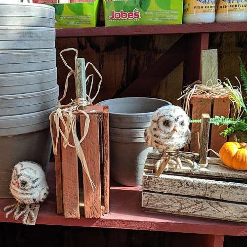 Plant supplies and cute handmade owls.