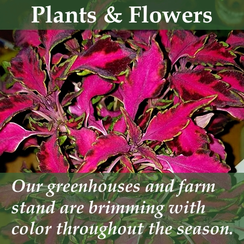 Plants and flowers fill our greenhouses with vibrant colors.