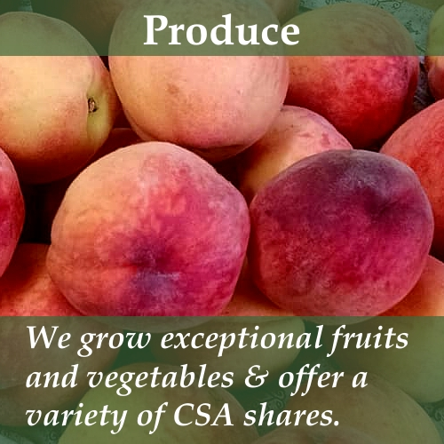 We grow exceptional fruits and vegetables and offer CSA shares.