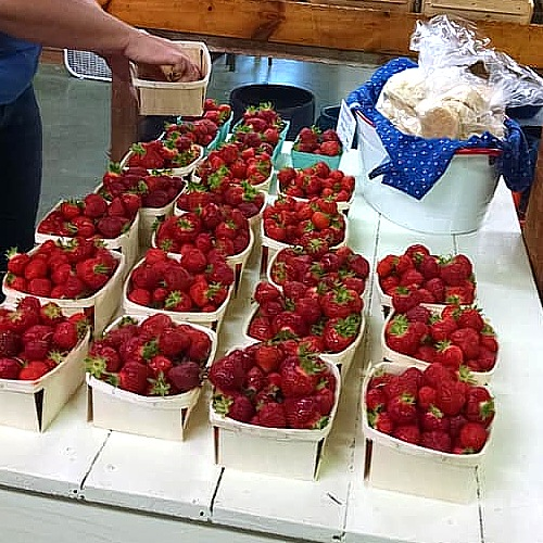 Luscious strawberries from our fields.